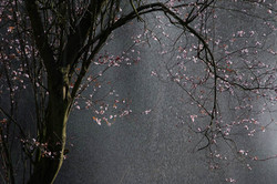Pink_tree&water