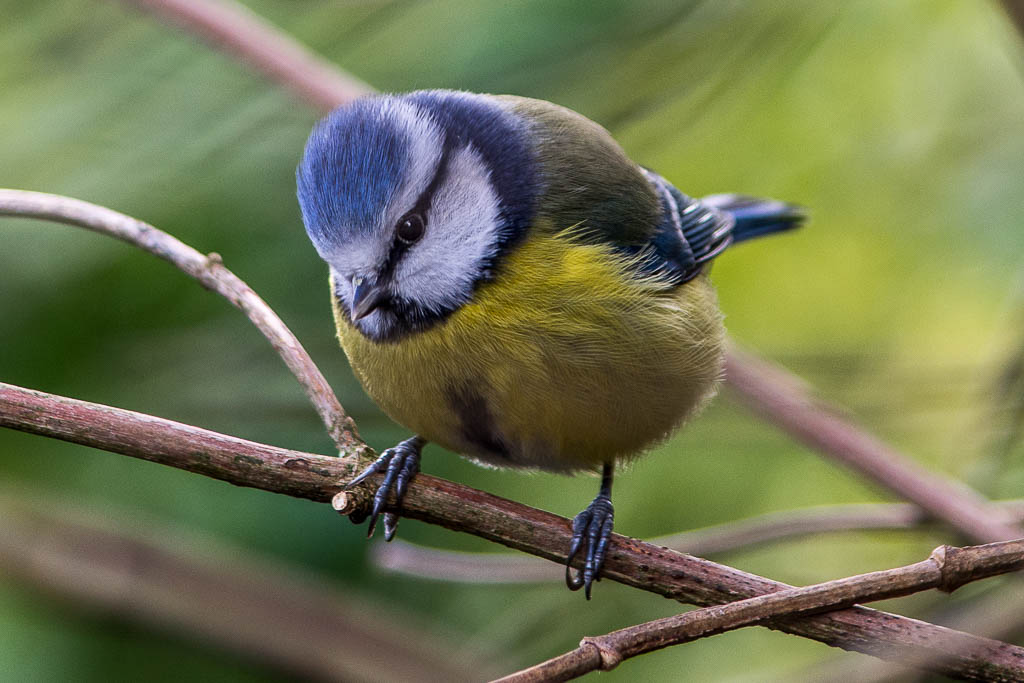 Blue Tweet