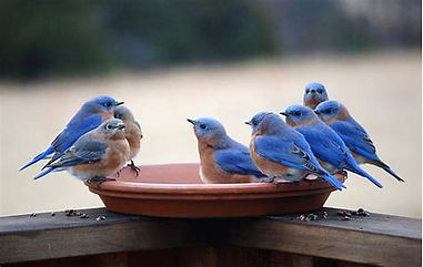 BB.party.birdbath.jpg