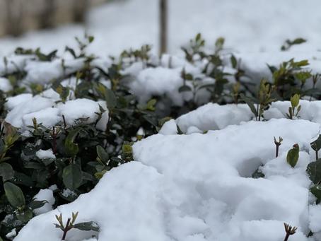 Snow week☃️