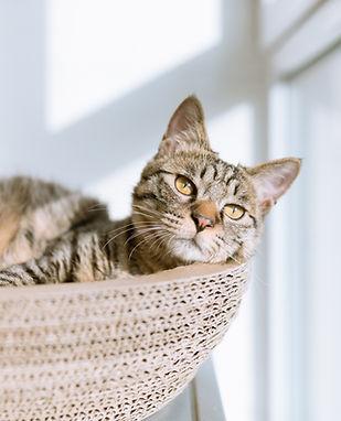 고양이 바구니에