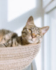 Cat in Basket, Edinburgh Pet Sitter, Edinburgh Cat Sitter