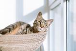 Temoignage: teigne de chat