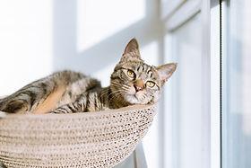 バスケットの中の猫