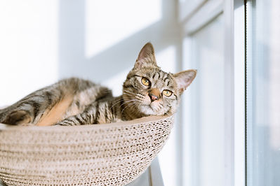 在籃子裡的貓