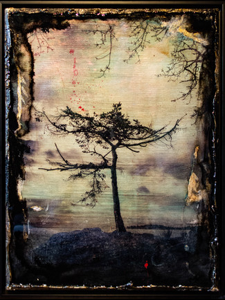 Mixed Media: Nature, 'One Day Like This'
