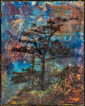 """""""Super Colour Tree"""""""