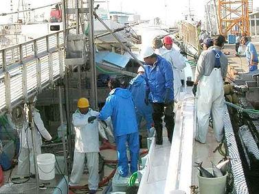 カツオ一本釣り会社概要1.jpg