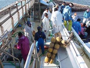 カツオ一本釣り漁業6.JPG