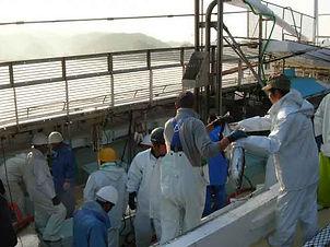 カツオ一本釣り漁業3.jpg