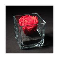 Rose Eternelle 0013