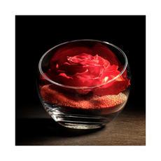 Rose Eternelle 0020