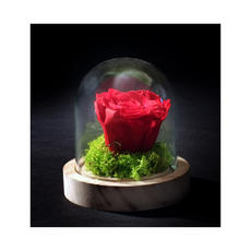 Rose Eternelle 0010