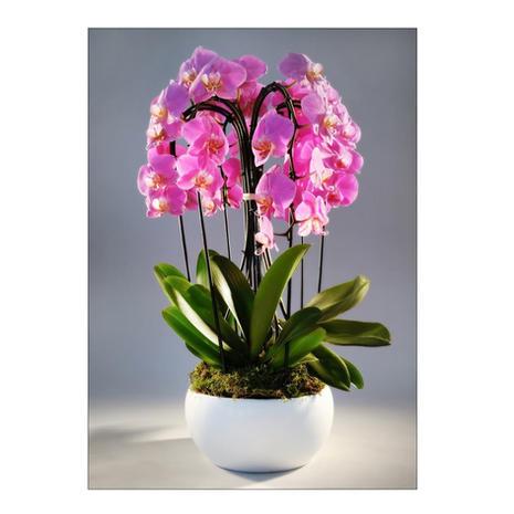 Composition Orchidée 1011