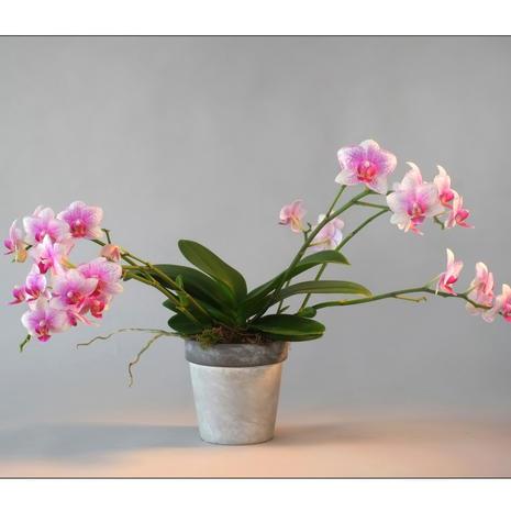 Composition Orchidée 0004
