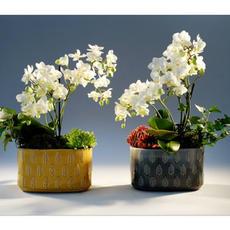 Composition Orchidée 0921