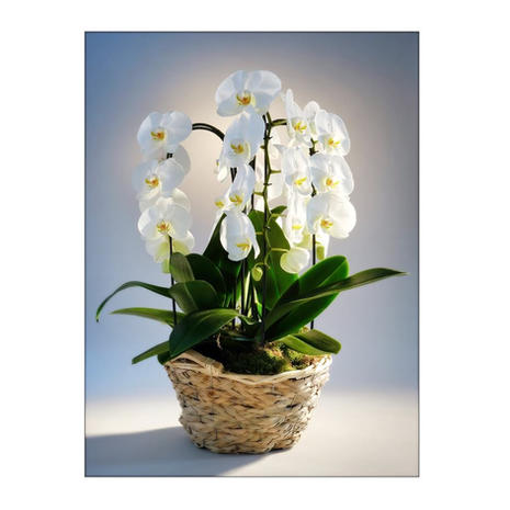 Composition Orchidées 0961