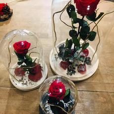 Roses Eternelles sous cloche