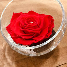 Rose Eternelle Rouge