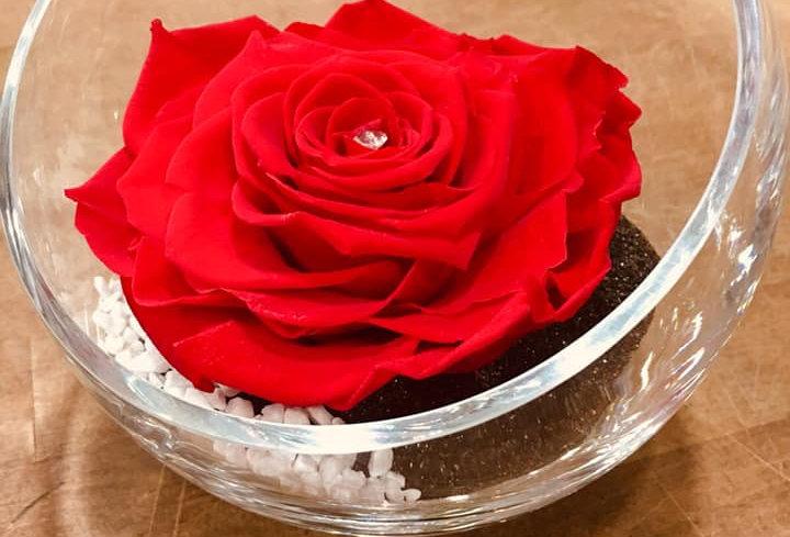Rose dans coupe ouverte