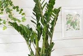 Plante 3