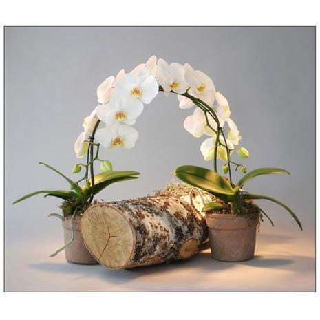 Composition Orchidée 0001