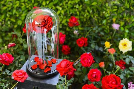 Roses-Eternelles-3.jpg
