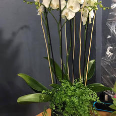 Orchidée à 4 branches