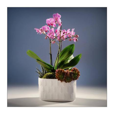 Composition Orchidée 0901