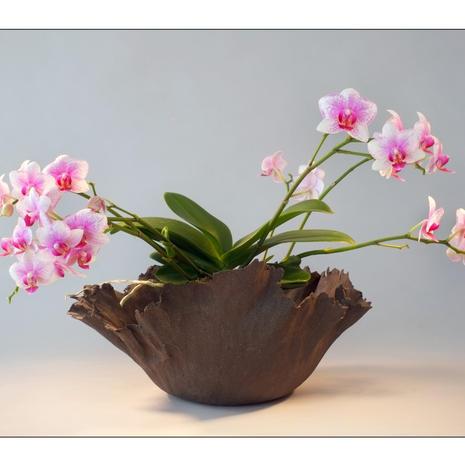 Composition Orchidée 0003