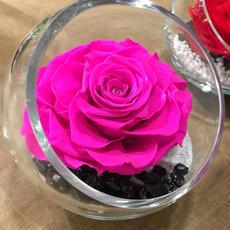 Rose Eternelle Fuschia