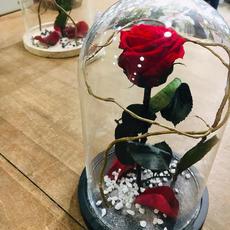 Rose Eternelle sous cloche