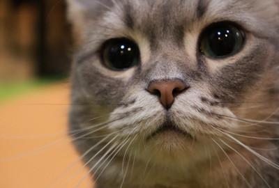 「動物愛護」について政策提言を追加しました