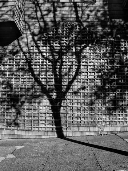 Tree Shadow-13.jpg
