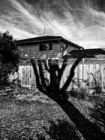 Tree Shadow-9.jpg