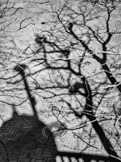 Tree Shadow-8.jpg