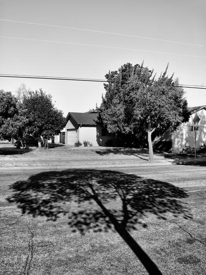 Tree Shadow-10.jpg