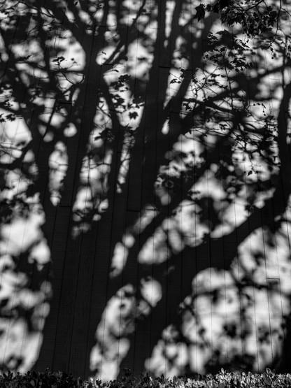 Tree Shadow-7.jpg