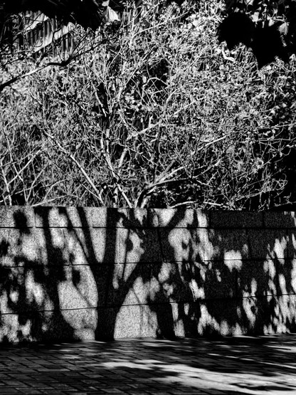 Tree Shadow-4.jpg