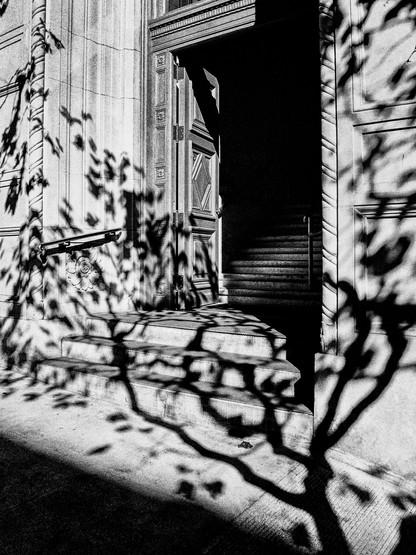 Tree Shadow-6.jpg