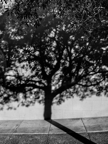 Tree Shadow-11.jpg