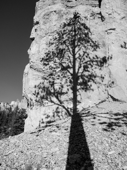 Tree Shadow-14.jpg