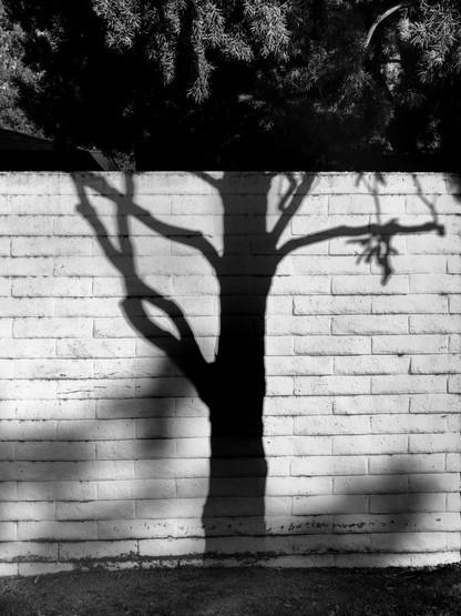 Tree Shadow-2.jpg