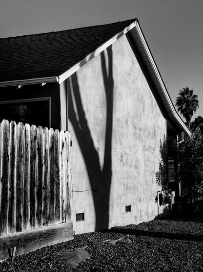 Tree Shadow-3.jpg