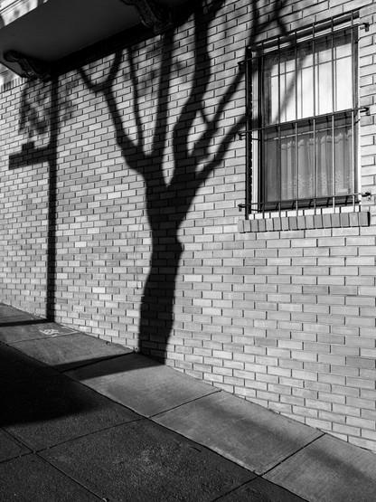 Tree Shadow-12.jpg