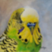 Yellow Budgie.jpg