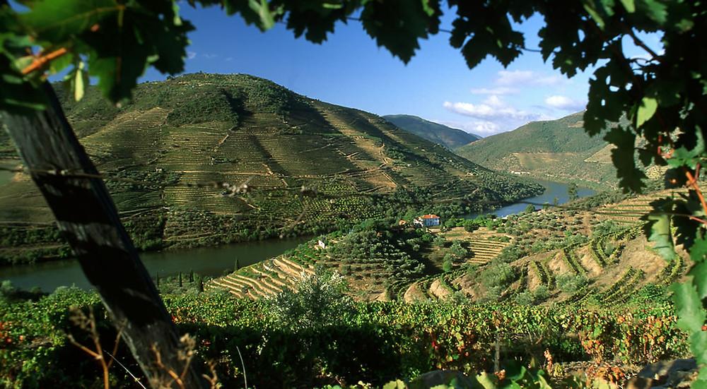 O Douro foi uma das primeiras regiões a receber um denominação DOC (Foto: Wines of Portugal)