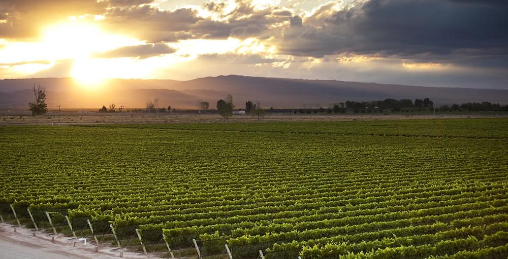 O Vale de Uco, em Mendoza, se destaca na qualidade dos vinhos produzidos