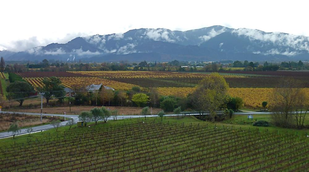 As vinhas de Sauvignon Blanc na Nova Zelândia (Foto: divulgação/mark-map.com)