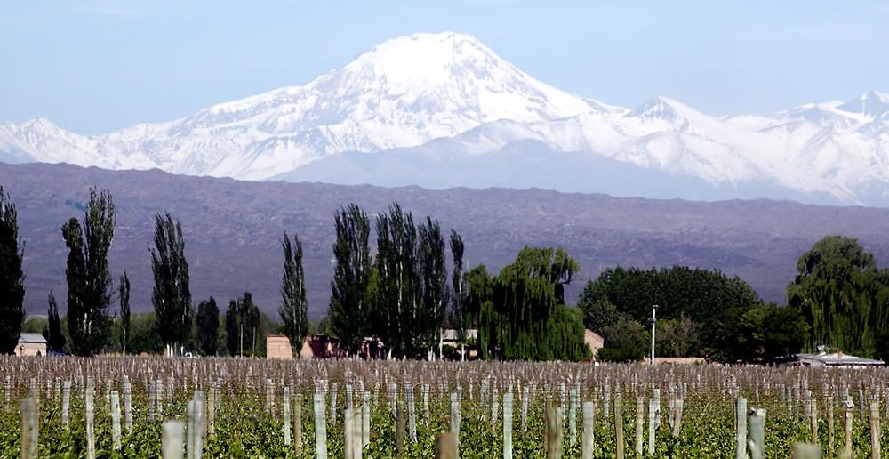 As plantações de Mendoza e a Cordilheira dos Andes